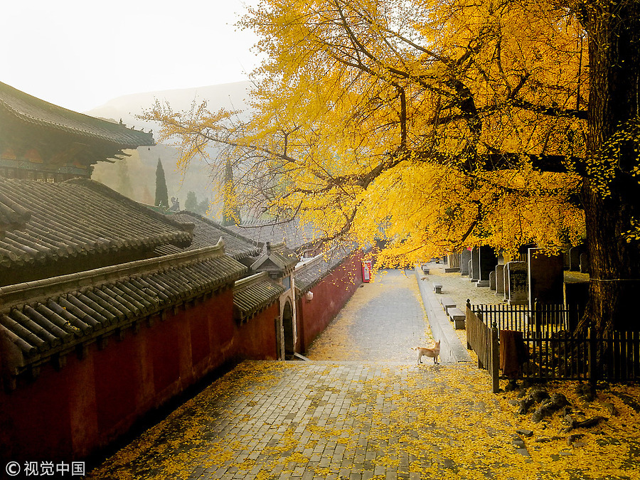 Ngắm thu nhuộm vàng cây, lá ở Trung Quốc