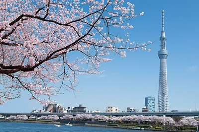 ĐÓN TẾT NHẬT BẢN 2019 : HÀ NỘI – TOKYO– PHÚ SĨ – YAMANASHI – KYOTO – OSAKA –  HÀ NỘI